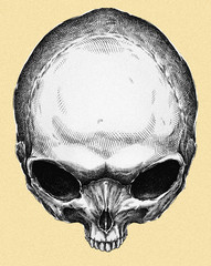 Engrave isolated alien skull hand drawn graphic illustration