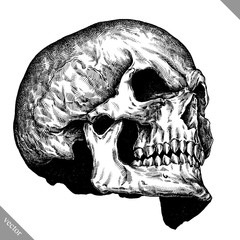Engrave isolated human skull hand drawn graphic vector illustration
