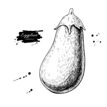 Eggplant hand drawn vector illustration. Isolated Vegetable engraved style object. Detailed vegetarian food
