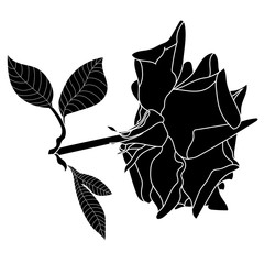 Black and white graphical blossom rose with leaves. Vector.
