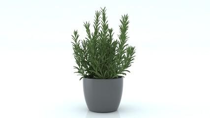 Decorative plant on gray pot on white background.