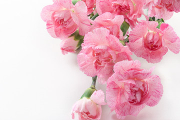 Mother's Day Card. Bouquet of pink Carnations on a white background. Flower gift.