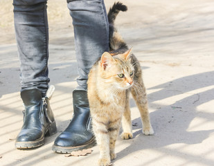Hungry cat rubs against the legs of a passerby. Street cat at his feet..