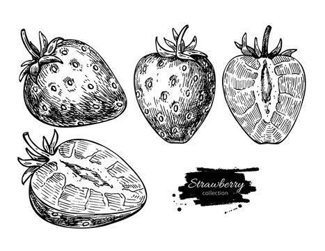 Strawberry vector drawing set. Isolated hand drawn berry and  sl