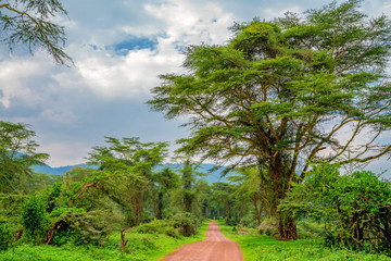 African scenic forest