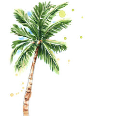 Palm tree isolated on white background, watercolor illustration
