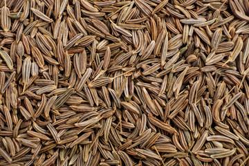 Fototapeta cumin seed dry aromatic spice, food background obraz