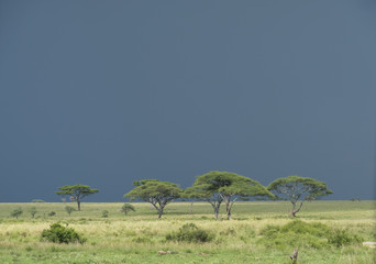 Dark Monsoon Clouds, Serengeti