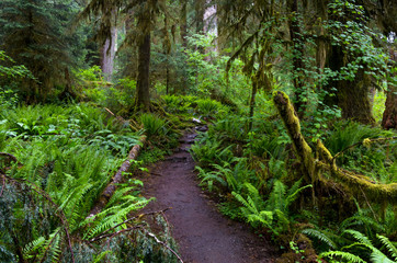Lush trail in Olympic National Park