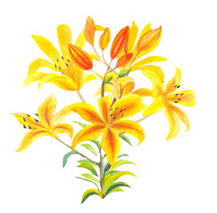 bouquet of orange lilies with watercolor isolated on white. Hand drawn illustration.