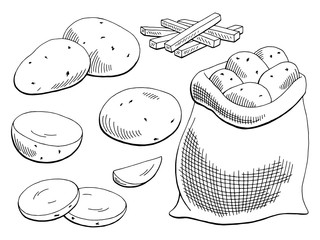 Potatoes vegetable graphic black white isolated sketch illustration vector