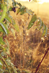 the spider's web with dew drops