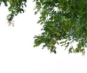 Foreground of lush trees isolated on white background