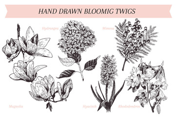 Vector hand drawn spring blossoms poster. Engraved botanical art. Vintage illustration. Mimosa, hyacinth, magnolia, rhododendron, hydrangea.
