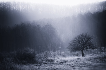 misty morning landscape with tree