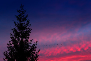 A spruce tree and flying geese are silhouetted against a red sunset