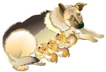 Illustration of shepherd dog mother nursing her puppies. Vector cartoon image.