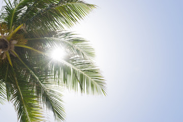 The sun shines through the branches of a palm tree