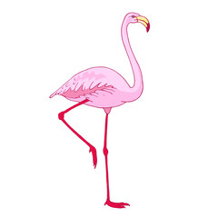 Vector pink flamingo bird illustration. Hand drawn sketch with the wild animal