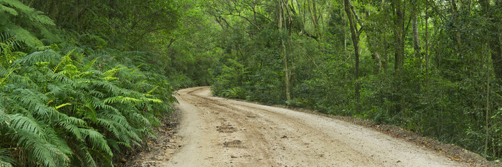 Dirt road through rainforest in Garden Route NP, South Africa