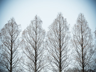 Color filter for abstract image. Row of trees in early spring against blue sky
