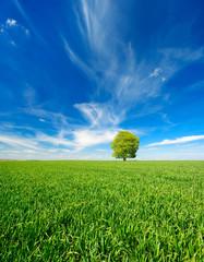 Fototapete - Einzelner Baum, grünes Feld, blauer Himmel, weiße Wolken, Landschaft mit Linde im Frühling