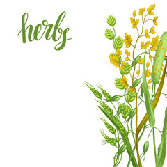 Background with herbs and cereal grass. Floral design of meadow plants