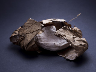 French banon cheese made from goat milk wrapped in chestnut leaves isolated on black background