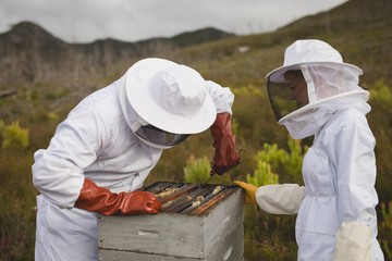 Male and female apiarists working on beehive