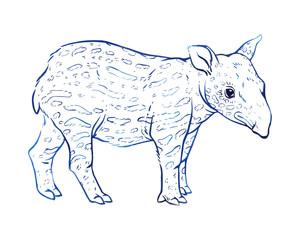 Hand drawn vector tapir