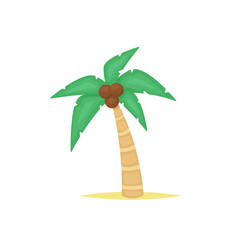 Palm tree vector isolated