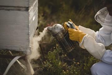 Female beekeeper smoking bees in hive