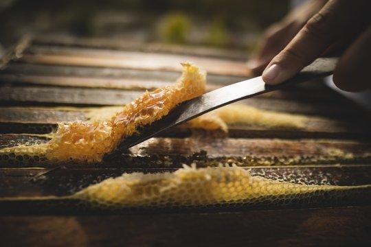 Beekeeper scraping wax from honeycomb