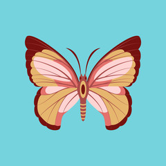 Colorful icon of butterfly isolated on blue