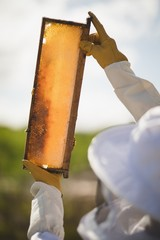Male beekeeper examining honey frame at apiary