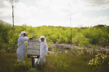 Beekeepers working on honeycomb on field