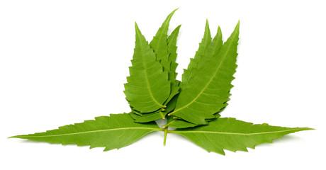Herbal Neem leaf
