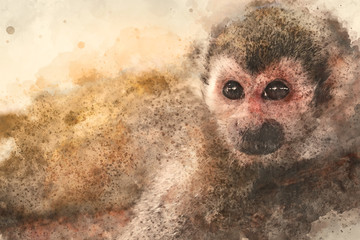 Abstract Monkey on watercolor background, Watercolor painting, Monkey