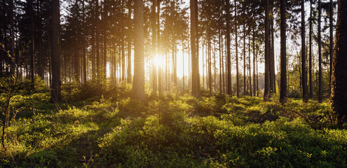 Sonnenaufgang auf einer Lichtung im Wald