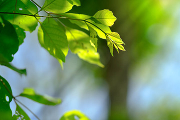 beautiful branch of tree with green leaf