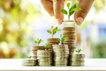 Fototapeta Growing plant on stack coin money for finance and banking growth concept obraz