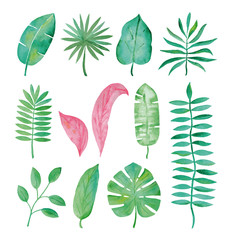Watercolor tropical leaves on white background.