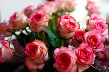 Pink roses for love background Bouquet of pink roses