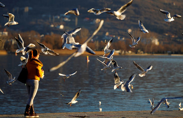 A girl feeds gulls on the shores of Ohrid lake in Ohrid