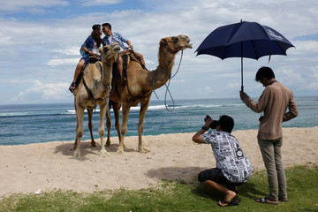 A couple have their picture taken on a camels in the luxury resort area of Nusa Dua on the island of Bali, Indonesia