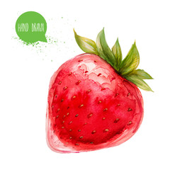 Hand drawn and painted watercolor ripe ctrawberry. Isolated on white background. Berries and fruit illustration.