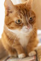 Portrait of a pretty cat