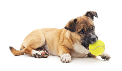 Small puppy with ball.