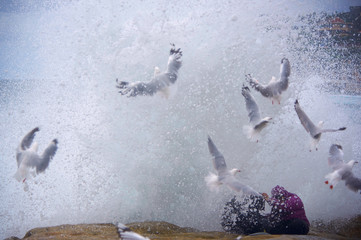 Seagulls and rock-fishing couple, Arie and Zakiyyah Widodo are sprayed by a large wave breaking against the rocks near Sydney's Bronte Beach, Australia