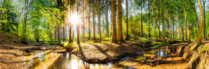 Fototapete - Wald im Frühling, Panorama einer Landschaft mit Bäumen, Bach und Sonne